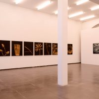Ludwig Rauch – Nothing true at all im Kunstraum Potsdam